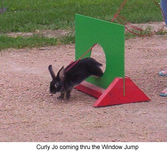 rabbit agility front page